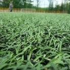 Przed konserwacją nawierzchni ze sztucznej trawy